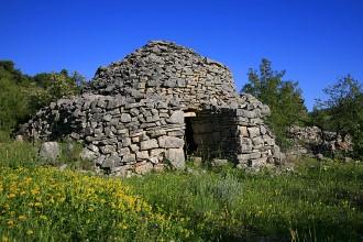 Trim, Starigradsko polje, Hvar